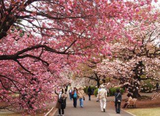 Du lịch Nhật Bản tự túc