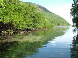 Vườn Quốc gia Côn Đảo sẽ quyến rũ khách du lịch Côn Đảo bởi sự đa dạng sinh học và độc đáo của nó.