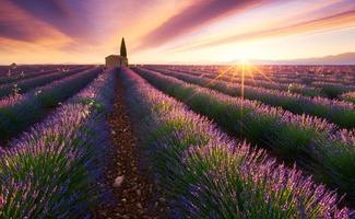 vẻ đẹp vô cùng hấp dẫn của Provence làm say lòng bao du khách khi tới đây